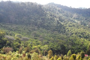MAGAMBA RAIN FOREST